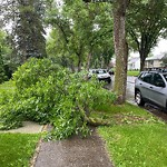 Tree/Branch Damage - Public Property at 9732 72 Avenue NW
