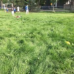Park Grass Maintenance at 12840 109 Ave NW Westmount