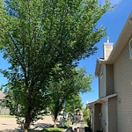 Overgrown Trees - Public Property at 802 119 Street SW