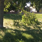 Tree/Branch Damage - Public Property at 3936 72 Street NW
