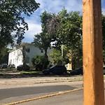 Tree/Branch Damage - Public Property at 10154 121 Street NW