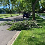 Tree/Branch Damage - Public Property at 10926 108 Street NW