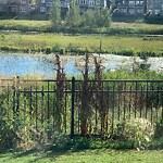 Noxious Weeds - Public Property at 3118 Winspear Crescent SW
