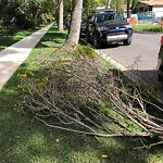 Tree/Branch Damage - Public Property at 12304 111 Avenue NW