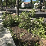 Tree/Branch Damage - Public Property at 11645 125 Street NW