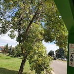 Tree/Branch Damage - Public Property at N53.49 E113.50