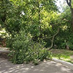 Tree/Branch Damage - Public Property at 9309 96 Street NW