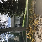 Tree/Branch Damage - Public Property at 8620 76 St NW Idylwylde