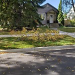 Tree/Branch Damage - Public Property at 11402 63 Street NW
